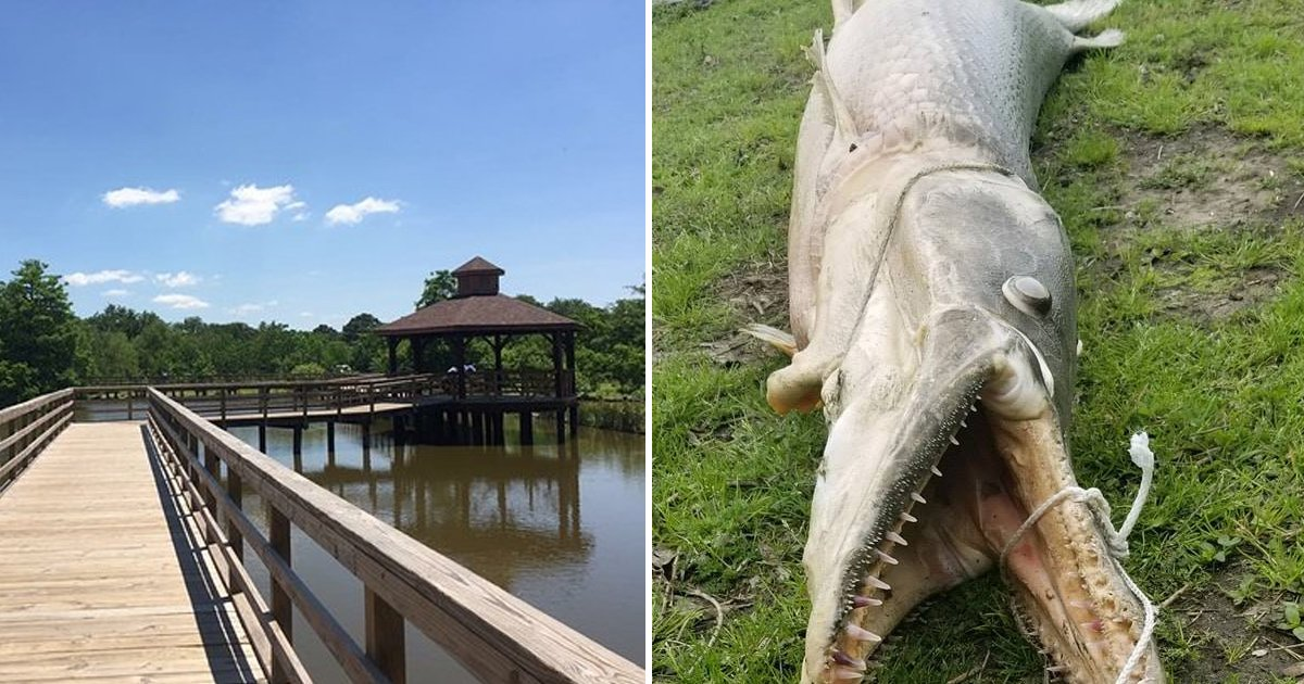 9 14.jpg?resize=412,232 - 한적한 호수 공원에서 갑자기 튀어나왔다는 '괴물'의 정체.jpg