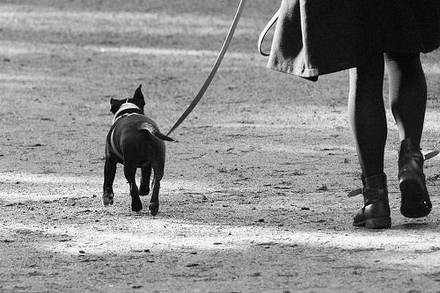 「夜道 犬 」の画像検索結果
