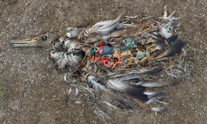albatross documentary에 대한 이미지 검색결과