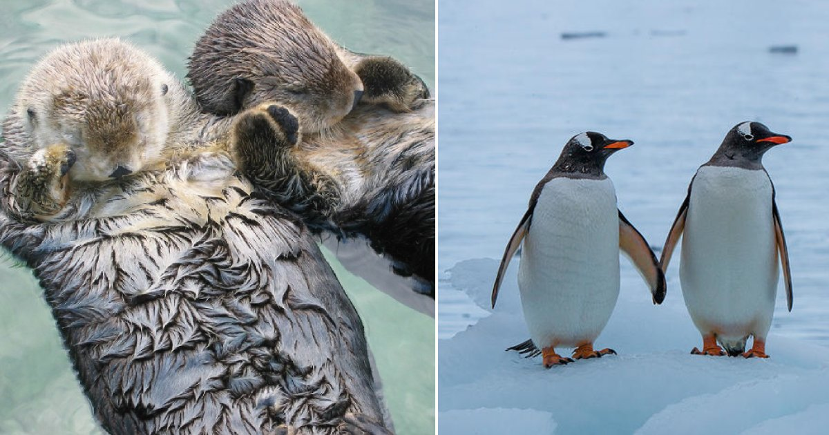 animal facts cute.png?resize=412,232 - 12 Adorable Animal Facts That Made Us Feel Warm Inside