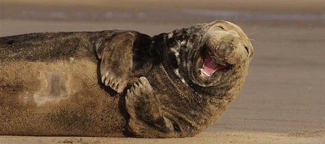 animals right moment perfectly timed animal photos 20 e1552904583346.jpg?resize=1200,630 - 40+ Stunning Times Photos Of Animals Were Taken At Precisely The Right Moment