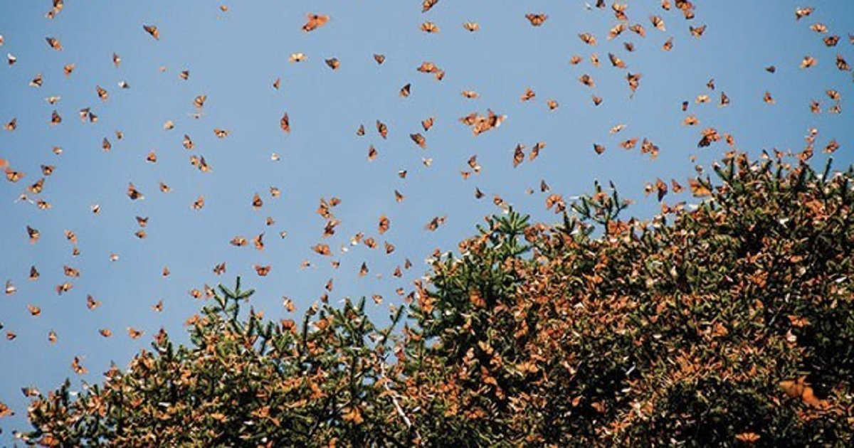 b3 2.jpg?resize=1200,630 - Huge Painted Lady Butterfly Migration Blankets The Skies Of Southern California