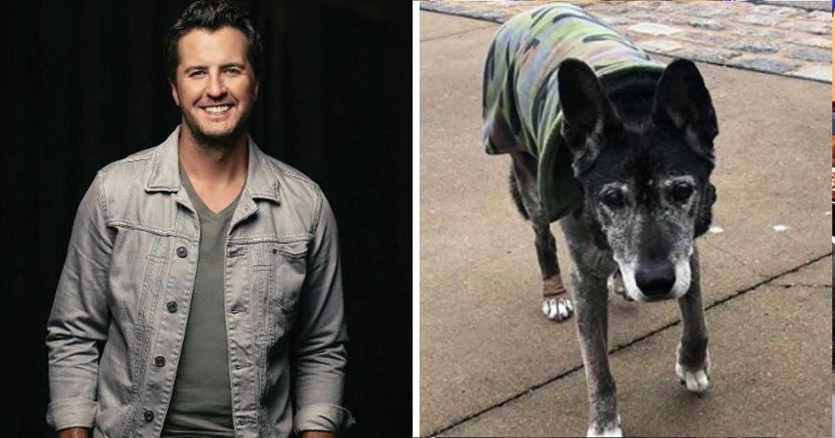 bbb.jpg?resize=1200,630 - Luke Bryan Gives Shelter To 18-year-old Dog Surrendered for Causing Allergies
