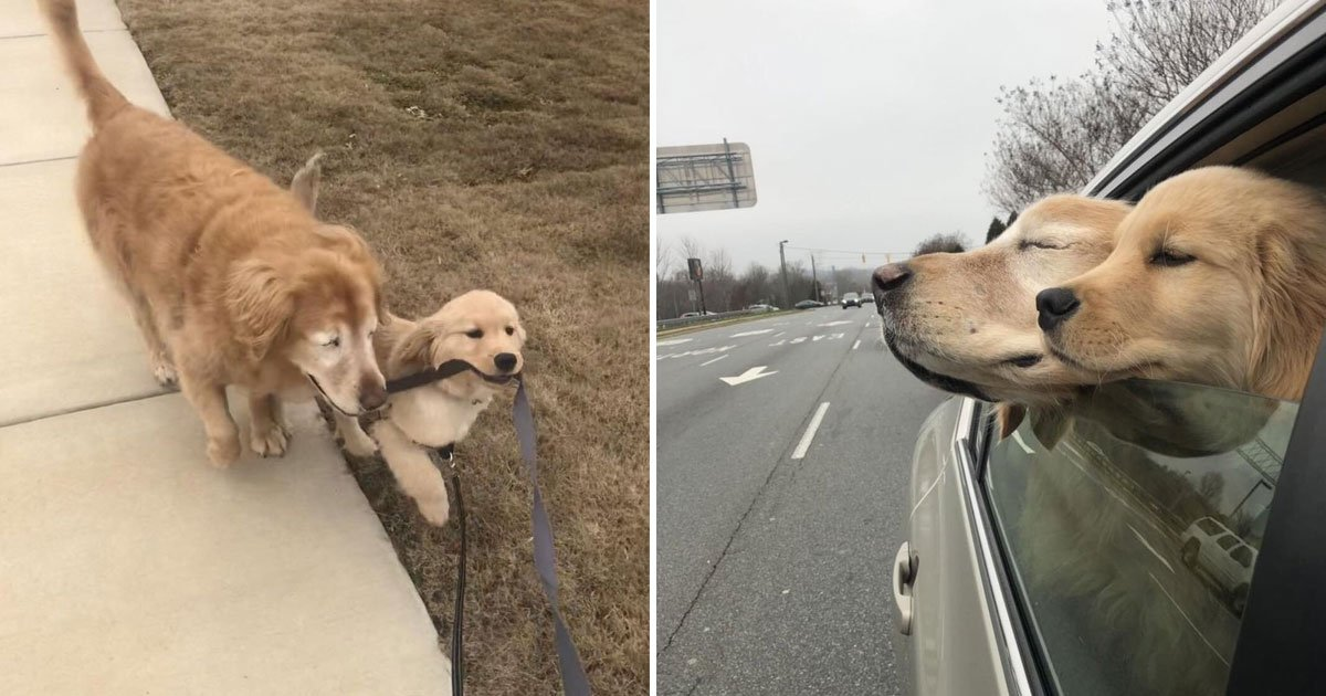 blind dog.jpg?resize=1200,630 - 4-Months-Old Dog Uses A Leash To Guide His New Friend Who Is Now Completely Blind