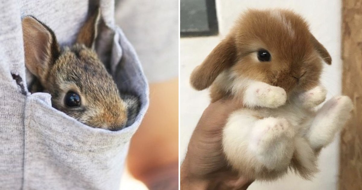 bunnies.png?resize=1200,630 - 15+ Adorable Bunny Photos To Prepare You For Easter