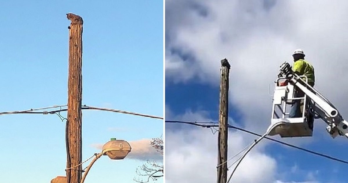 c4.jpg?resize=412,232 - Verizon Suspends Worker For Using Company Equipment To Rescue A Cat Trapped On Top Of A Telephone Pole