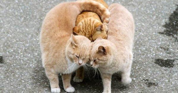 calin animal 05 e1552630695346.jpg?resize=412,232 - 40+ des câlins d'animaux, le web qui fait du bien