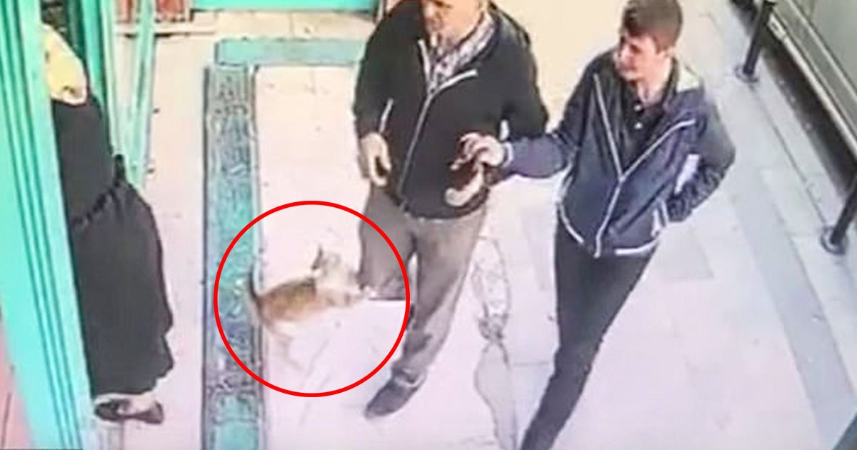 cat attacks men dogs.jpg?resize=1200,630 - Stray Cat Pounces Only Men And Dogs Outside An Market