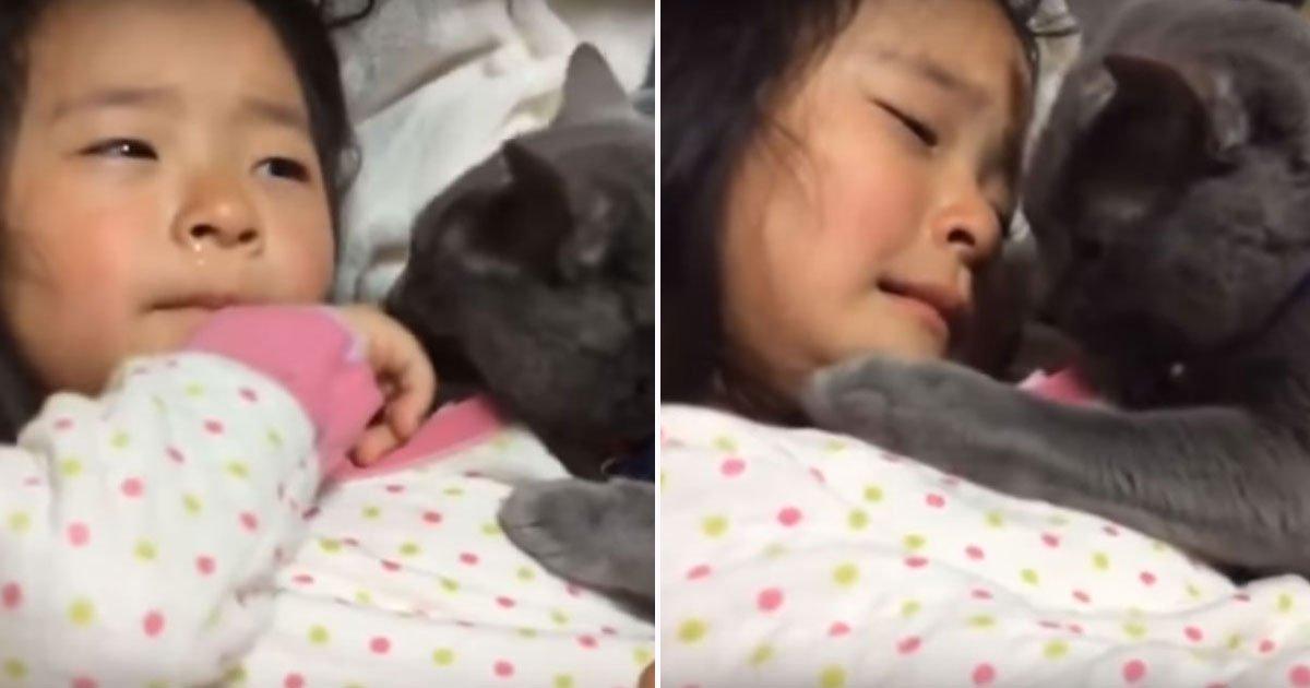 cat comforts owner.jpg?resize=300,169 - TOUCHANT : La vidéo d'un chat qui réconforte une petite fille qui pleure