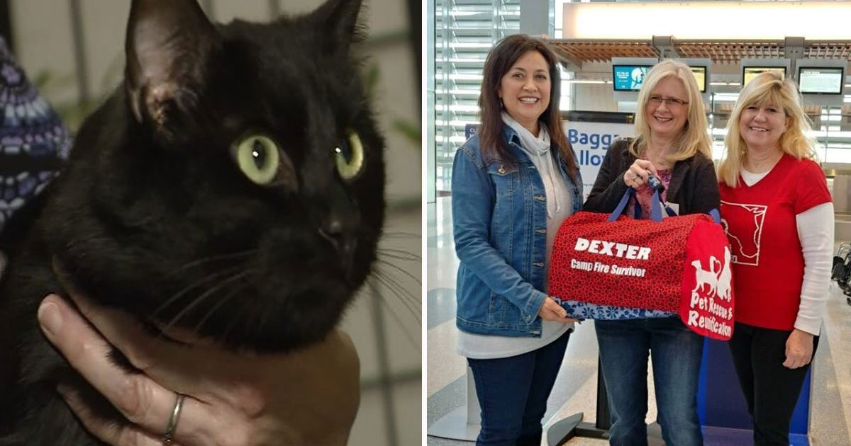 cat lost wildfire found.jpg?resize=412,232 - Couple Thought They Lost Their Cat In The California Wildfires - Found It Back After 102 Days