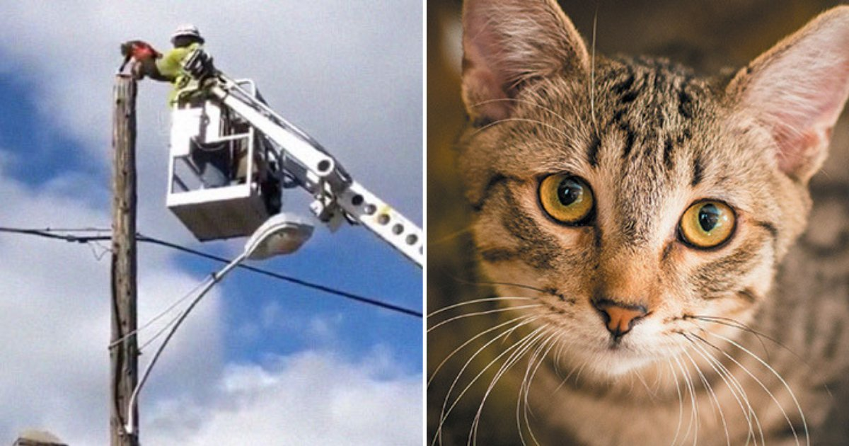 cat6 1.png?resize=1200,630 - Verizon Suspends Worker After He Rescued A Cat Using Company Equipment