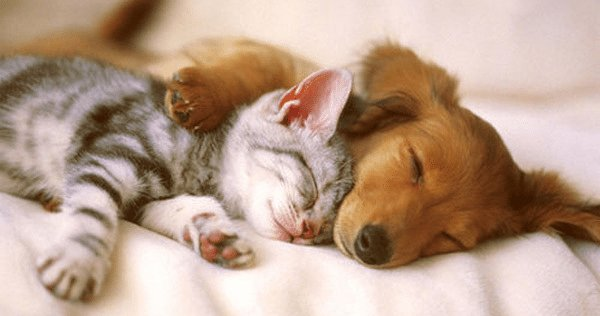 cats dogs friends image 6 png e1552964708718.png?resize=1200,630 - 40 Cats And Dogs That Prove You Don't Need To Be The Same Species To Be Best Friends