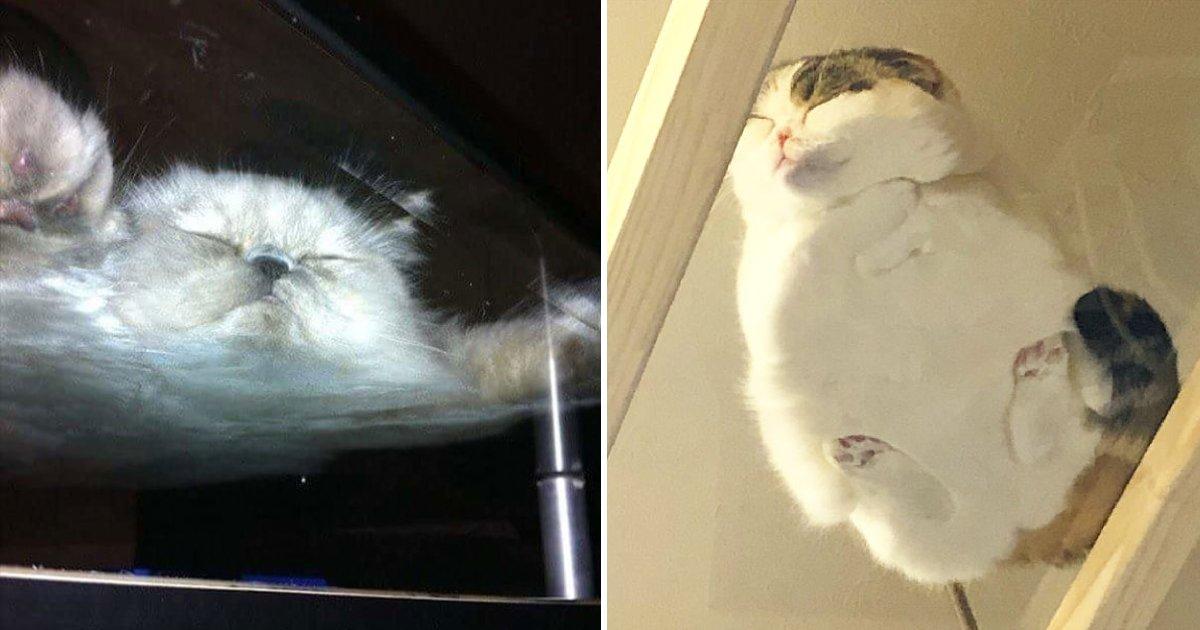 cats on glass table.png?resize=188,125 - 15+ photos hilarantes qui montrent que les tables en verre sont conçues pour les chats