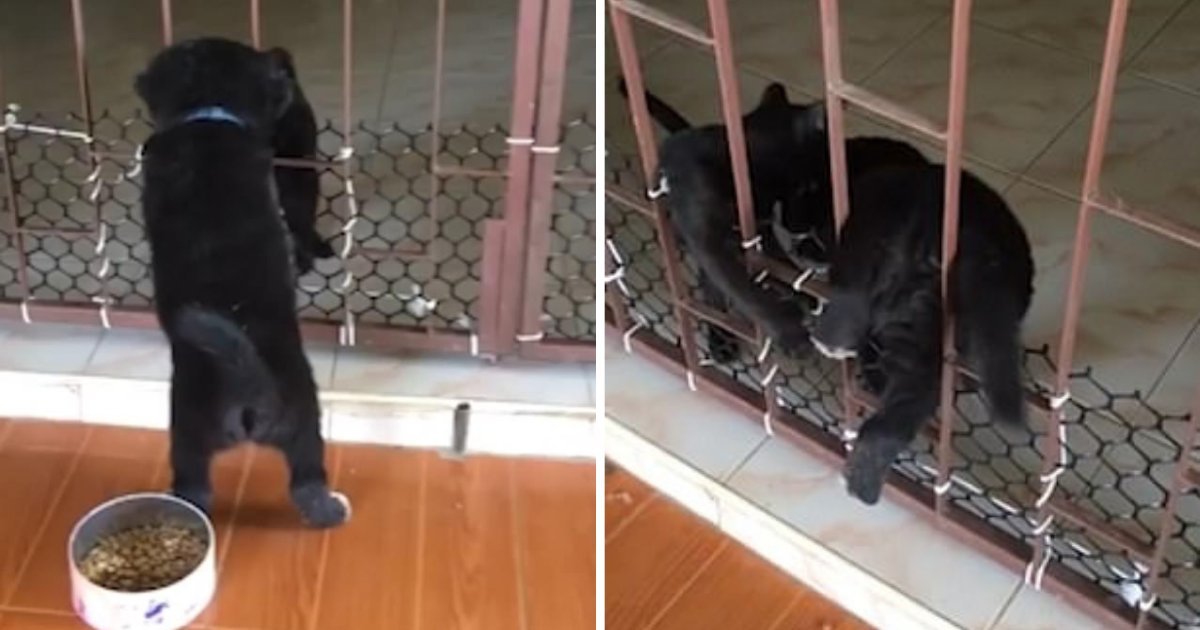 d3 20.png?resize=412,232 - Adorable Video Shows Cat Helping His Dog Friend to Get Out of theDoor He is Stuck in