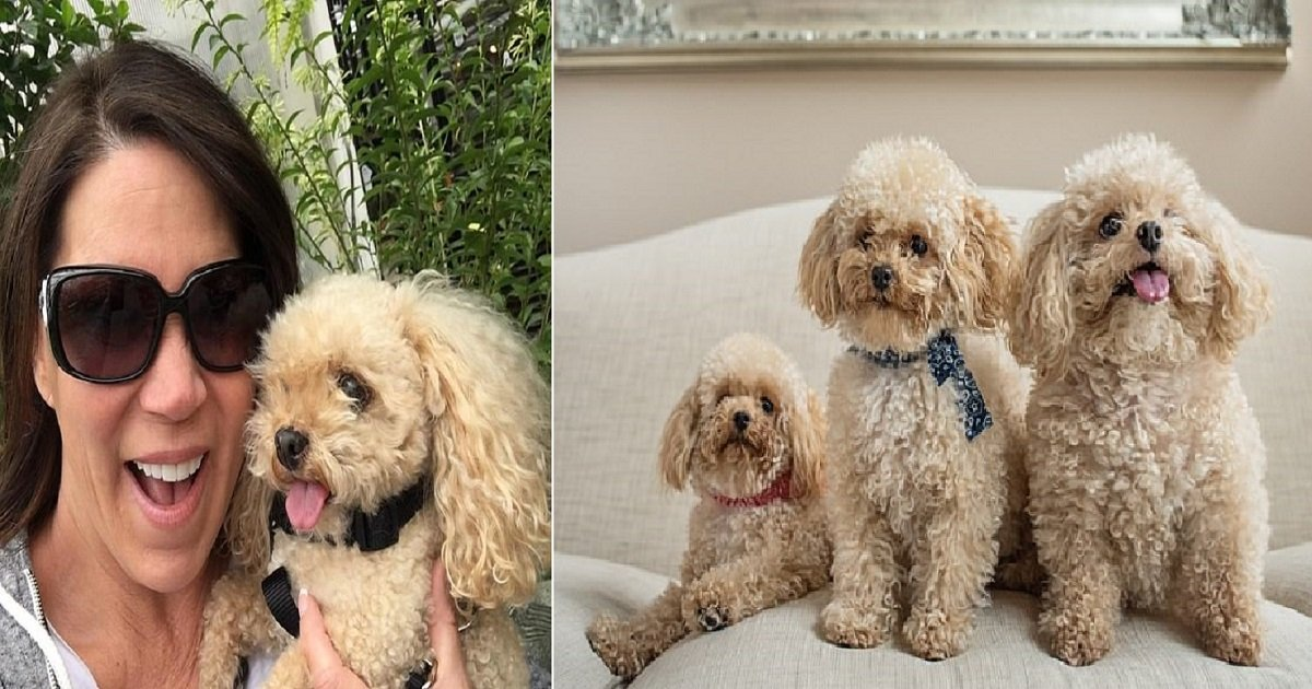 d3 6.jpg?resize=1200,630 - Woman Spends $50K To Clone Her Aging Pet Poodle