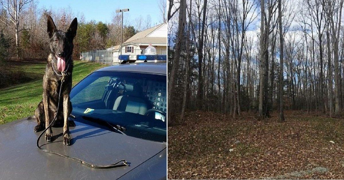 d3 8.jpg?resize=412,232 - Un chien K9 retrouve des enfants disparus de Virginie en 15 minutes