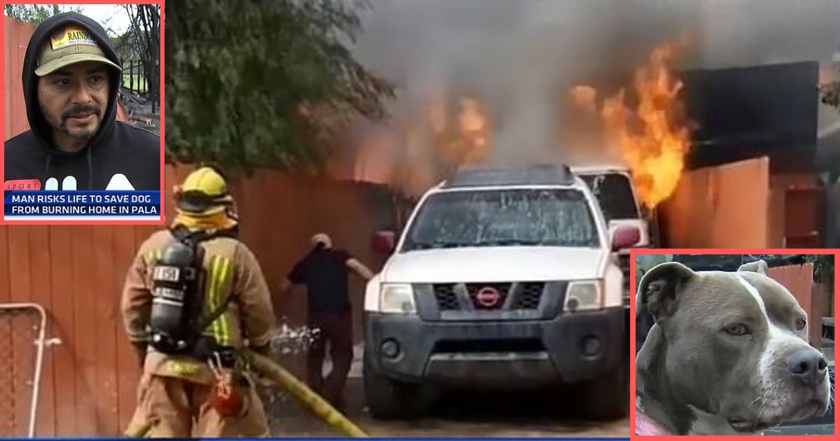d3 8.png?resize=412,232 - Man Rescuing His Dog From Fire is Amazing: Here's the Entire Story