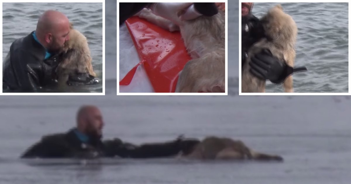 d4 15.png?resize=1200,630 - Chilling When a Dog Passed Out on an Ice Sheet But Then This Happened