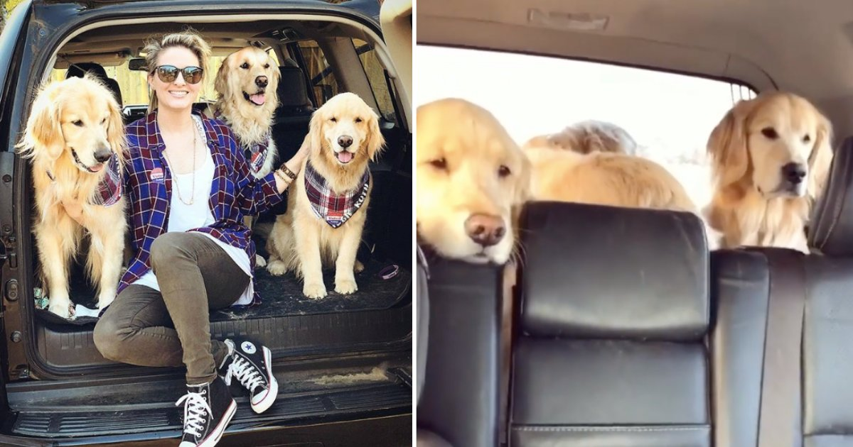 """d5 15.png?resize=1200,630 - Golden Retriever Sisters Got Grumpy After Their Vet Visit and Did Not Move Until Their Mom Asks """"'Who's Hungry?'"""