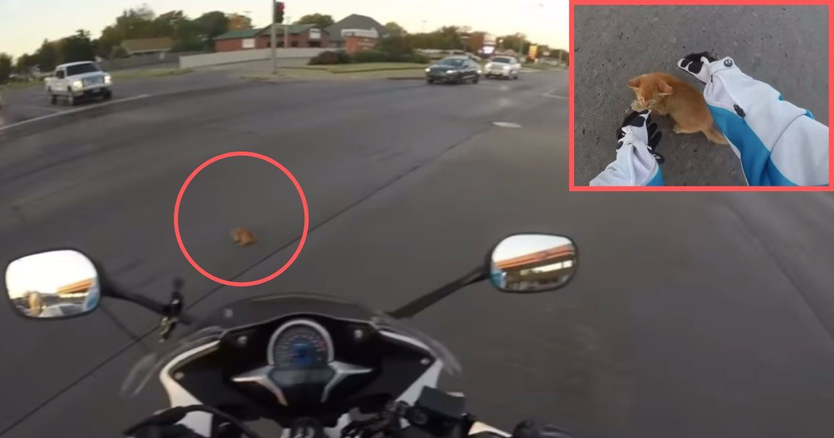 d5 2.png?resize=412,232 - A Kitten Who Was Trapped on A Highway Was Saved By A Lady Biker