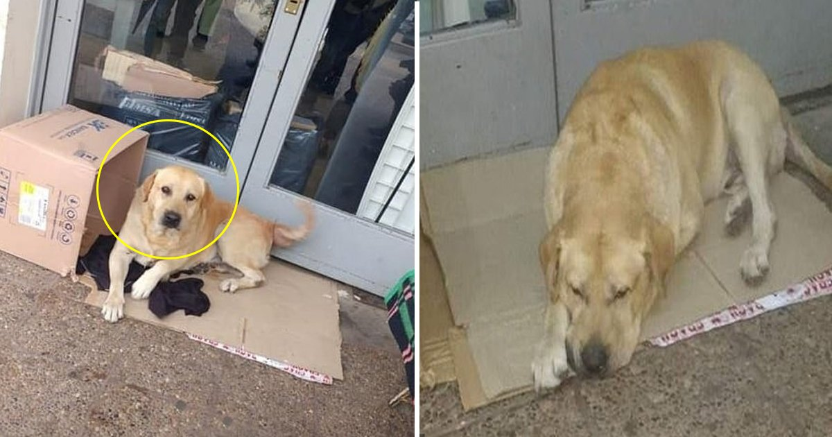dfafd.jpg?resize=412,232 - This Faithful Labrador Has Been Holding Up At The Passageway To An Emergency For Over Seven Days, Unaware Of Its Owner's Death