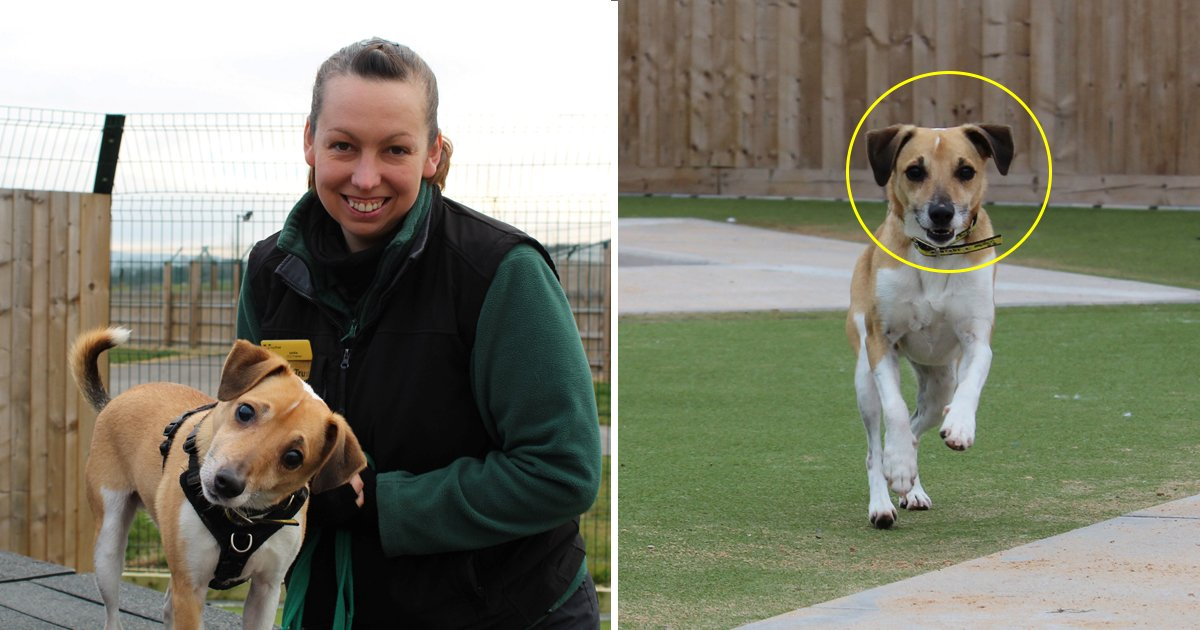 dfd.jpg?resize=412,232 - Four-year Dog Suddenly Went Blind - Animal Trust Is Still Looking For 'Guide Humans' To Adopt Him