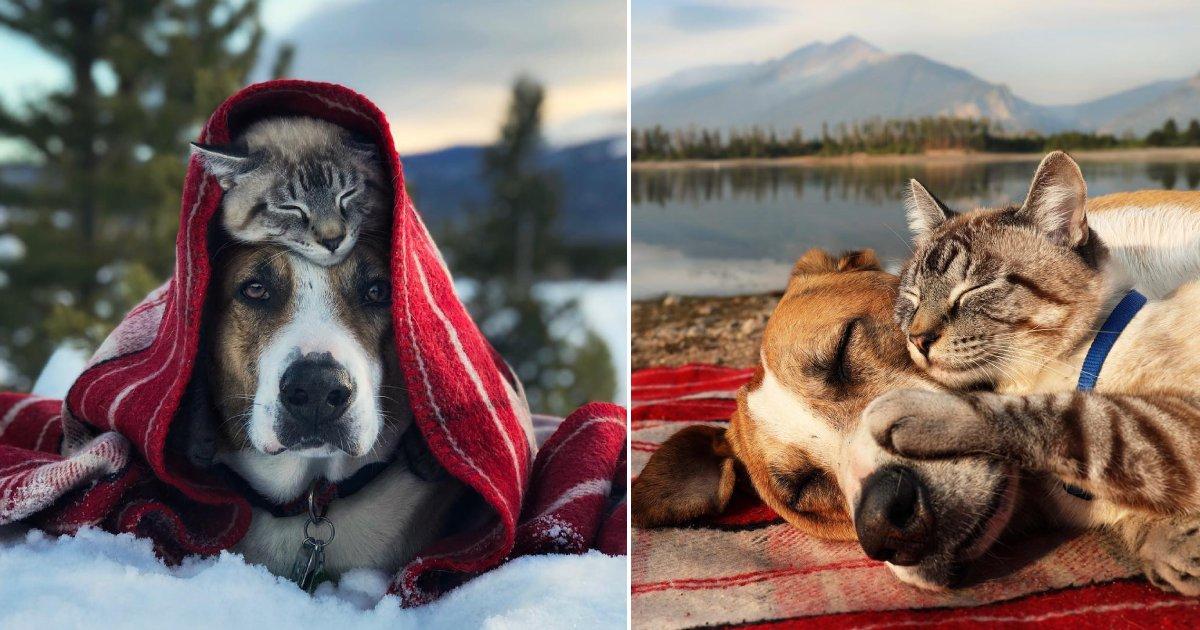 dog cat bond.png?resize=1200,630 - 15 photos adorables de chats et de chiens qui ont appris à s'aimer