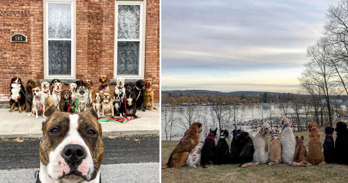 dog walk program.png?resize=1200,630 - Adorable Pack Of Dogs Walk Together And Pose For Group Pictures Every Day