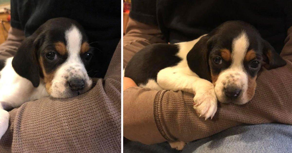 dog with upside down paws.jpg?resize=412,232 - Un chiot qui est né avec les pattes à l'envers sera capable de marcher après une chirurgie