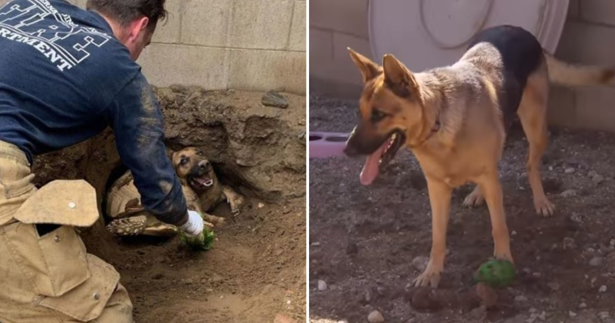 doggy.png?resize=412,232 - Firefighters Share How They Rescued A Tortoise And A Dog Trapped Underground