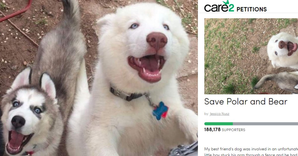 dogs4.png?resize=412,232 - More Than 180K People Signed Online Petition To Spare Life Of Dog That Bit A Child, Requiring Amputation