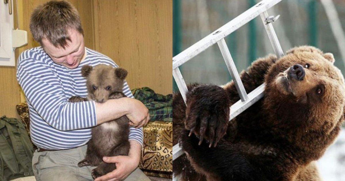 e696b0e5bbbae9a1b9e79bae 39.png?resize=412,232 - 可愛いクマの赤ちゃんを保護した男性、3年後に公開した写真が驚き!!