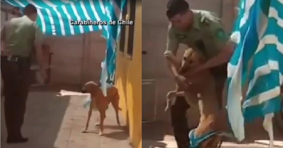 ec8db82 6.jpg?resize=412,232 - 강아지가 자신을 구해준 경찰관에게 보인 '의외의' 반응(영상)