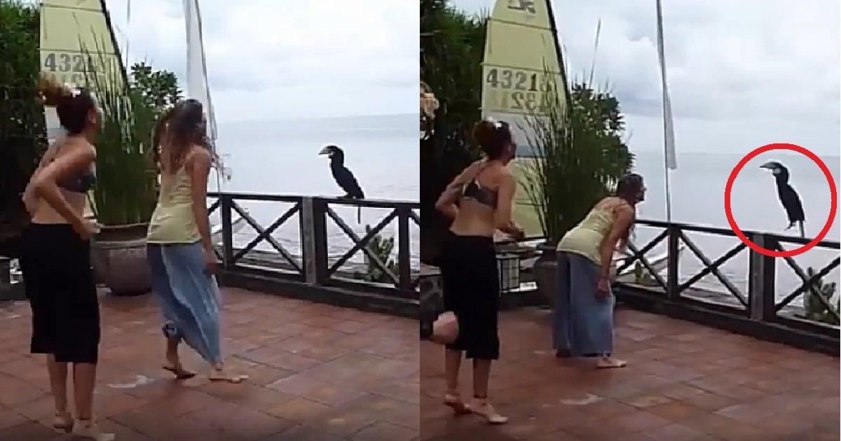 """ec8db82 8.jpg?resize=300,169 - """"날 따라 해봐요~ 이렇게!"""" 똑같이 점프하는 코뿔새 (영상)"""