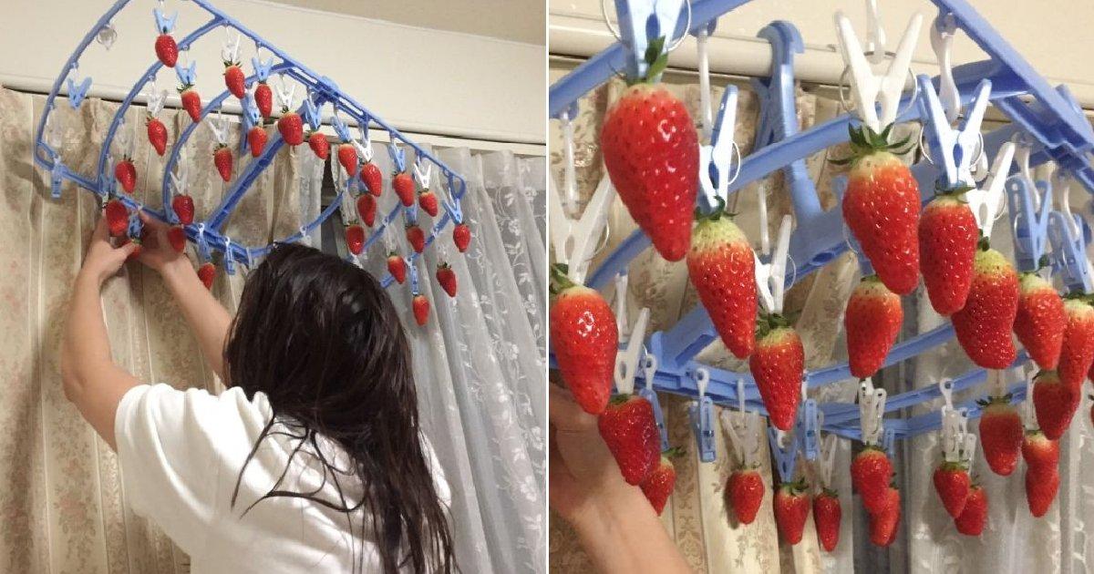 eca09cebaaa9 ec9786ec9d8c 26.png?resize=412,232 - 여친이 남친 집에 가짜 '딸기 나무' 만든 이유