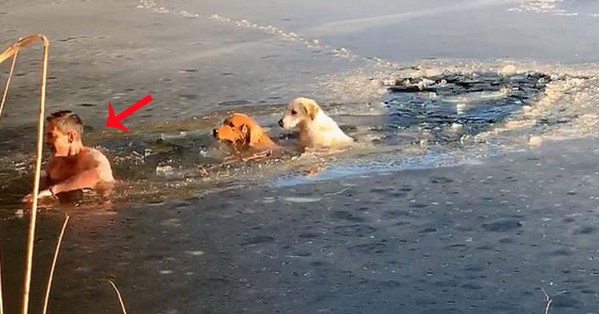 footage shows a man and his golden retriever dived into frozen lake to rescue two stranded dogs.jpg?resize=300,169 - Une vidéo montre un homme et son Golden Retriever plongeant dans un lac gelé pour sauver deux chiens en détresse