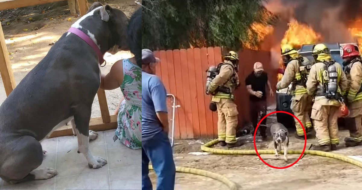 footage shows man risks his life to save his dog from house fire.jpg?resize=1200,630 - Footage Shows Man Risking His Life To Save His Dog From House Fire