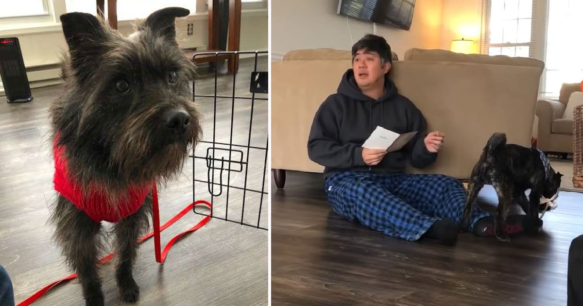foster dog adopted.jpg?resize=412,275 - Dog - Who Was Treated Badly And Abandoned By His Owner - Finally Finds A Loving Family