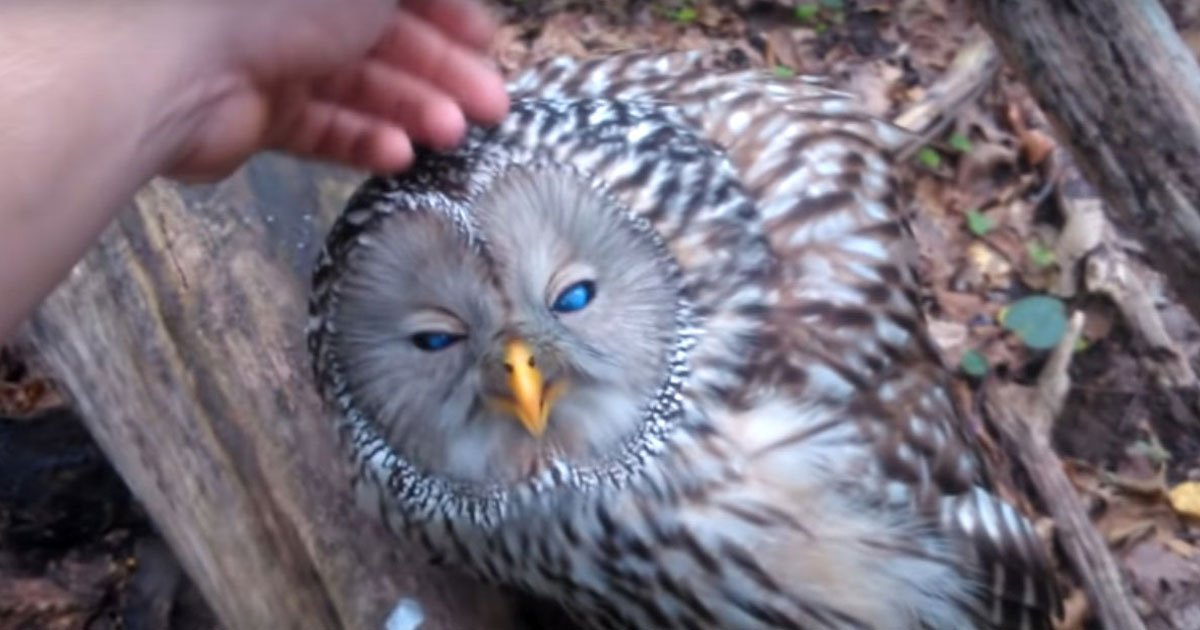 injured owl.jpg?resize=1200,630 - Man Found An Owl Sitting Motionless On A Tree - Later Found Out What Really Happened To It