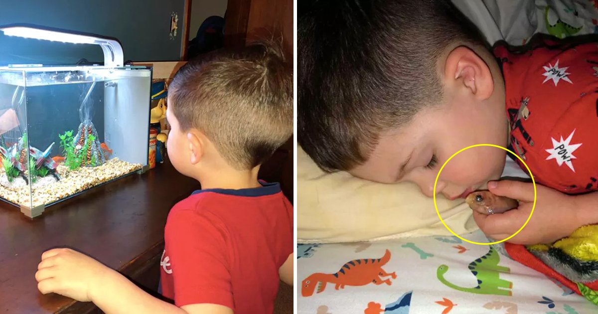 kkkkkk.jpg?resize=1200,630 - Little Boy Wanted To Cuddle With His Pet Golden Fish - Unfortunately The Ending Was Not What He Expected