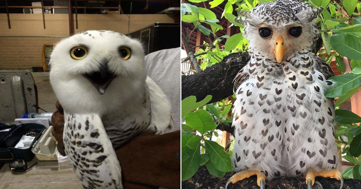 majestic owls.png?resize=1200,630 - 14 Photos That Prove Owls Are One Of The Most Majestic Creatures