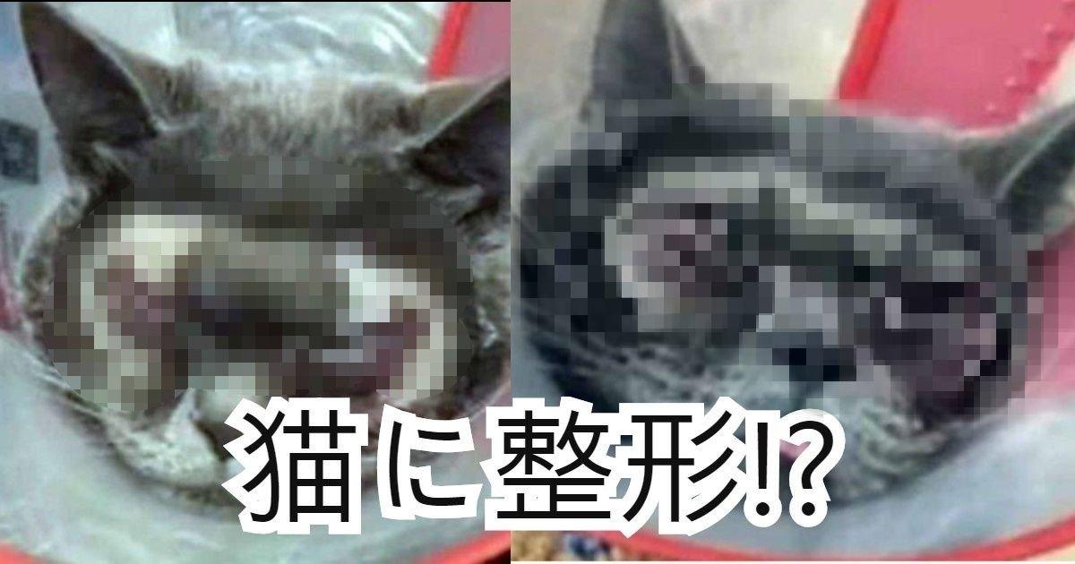 neko seikei.png?resize=412,232 - 「不細工」という理由で飼い猫を整形させた飼い主