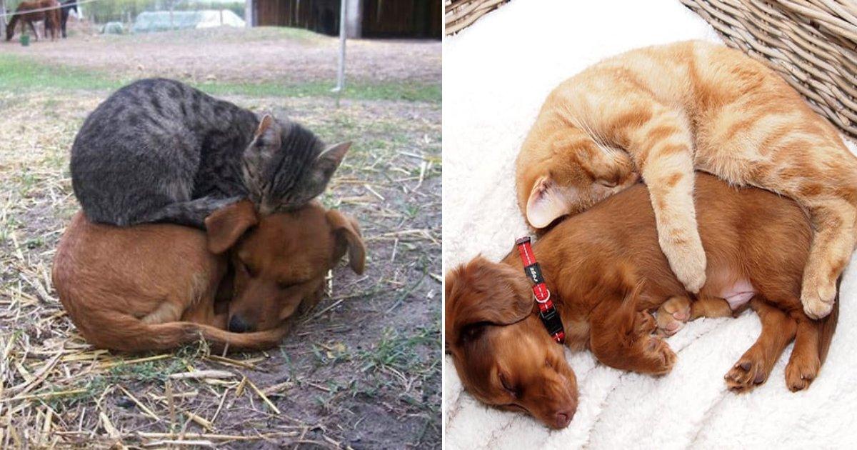 not mortal enemies.png?resize=188,125 - 25 Photos de chiens et chats qui forment des duos spéciaux