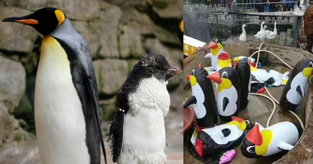 penguin.png?resize=412,232 - 動物園なのに本物の動物がいない?動物園に大量の人形が置かれ子どもが泣く