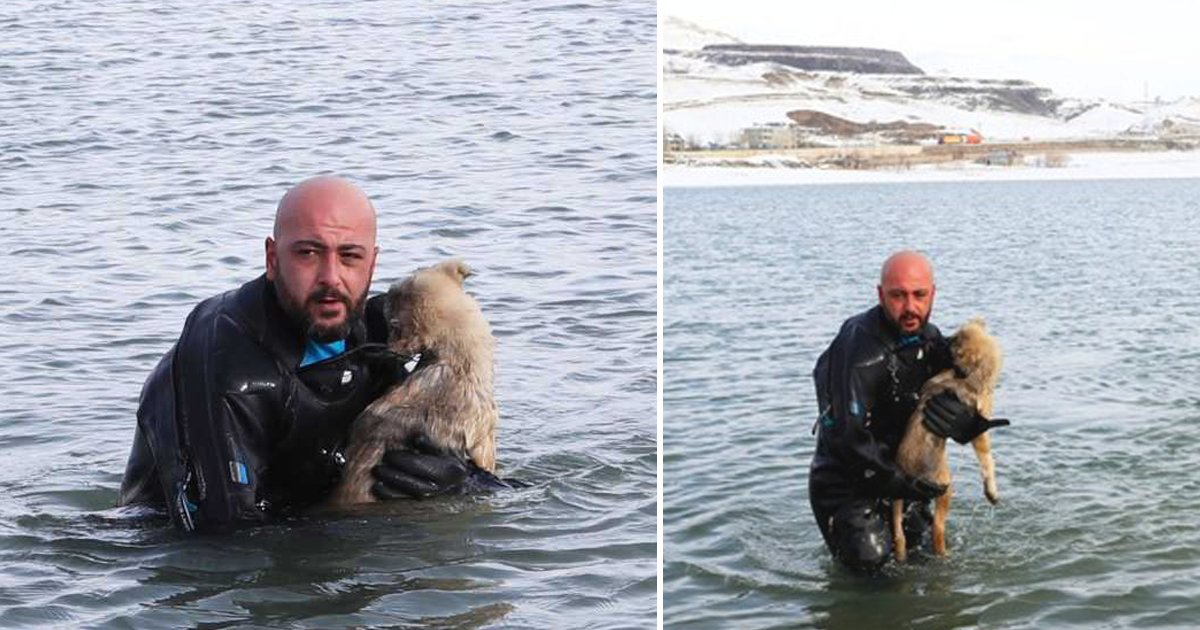 police save dog.png?resize=1200,630 - Officer Rescues A Dog From Frozen Lake And Adopts Her