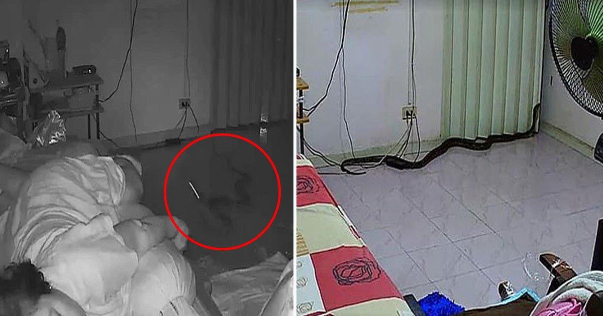 python bit woman.jpg?resize=1200,630 - Un python est entré dans la maison d'une femme par ses toilettes et l'a mordue
