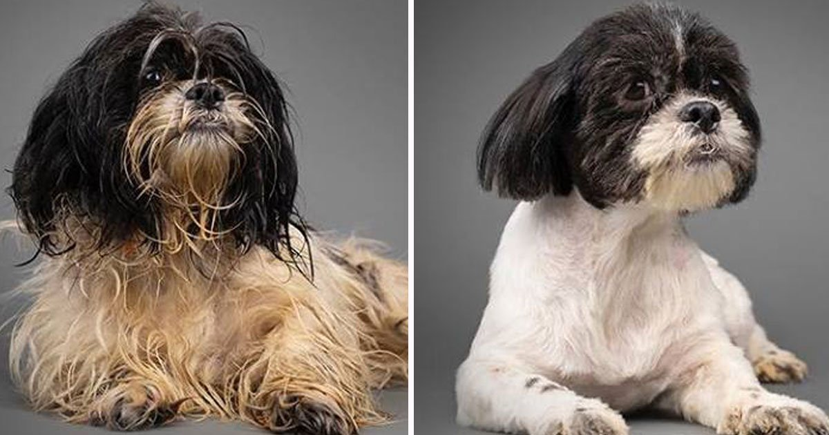 rescued pups before after pics.jpg?resize=412,232 - These Before And After Video Of Rescued Dogs Will Melt Your Heart