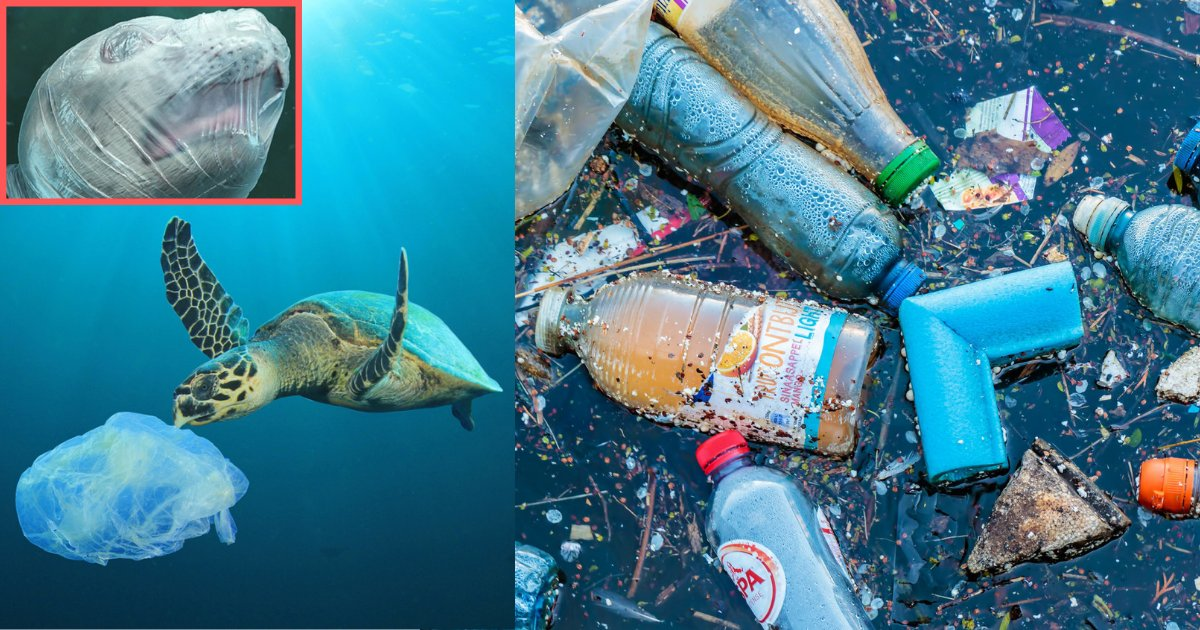 s1 15.png?resize=1200,630 - Disturbing Images of Marine Life Suffering Because of Plastic Waste is Dividing Opinions of Social Media Users