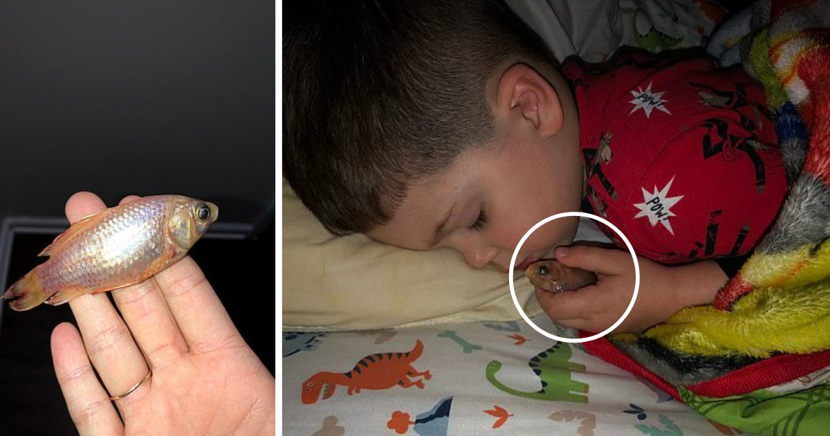 s1 5.png?resize=1200,630 - Mom Finds Her Innocent 4-Year-Old Boy Sleeping With His Dearly Goldfish Which Died In His Arms As He Took It Out of Water