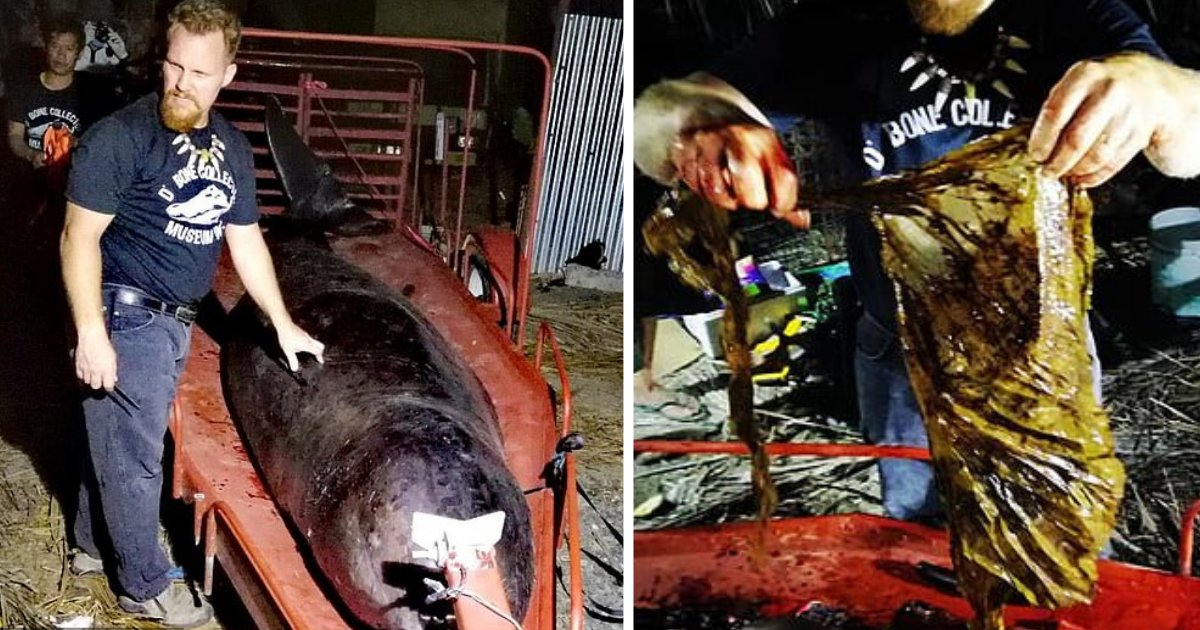 s4 12.png?resize=300,169 - Whale Found With 80 Pounds of Plastic Waste Inside Stomach